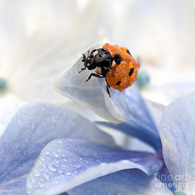 Purple Flowers Photograph - Ladybug by Nailia Schwarz