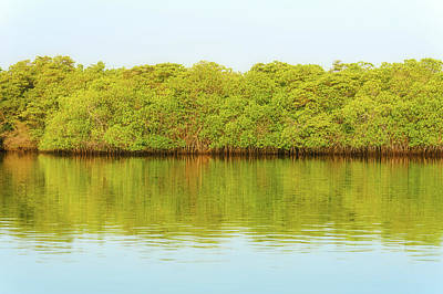 Photograph - Lagoon On Santa Cruz Island In Galapagos by Marek Poplawski