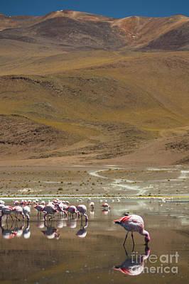 Photograph - Laguna Colorada, Andes, Bolivia by Gabor Pozsgai