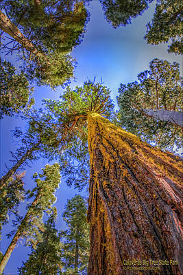 Photograph - Giant Sequoia Trees Iv by LeeAnn McLaneGoetz McLaneGoetzStudioLLCcom