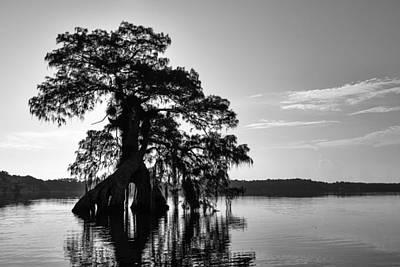 Photograph - Lake Disston Cypress by Stefan Mazzola