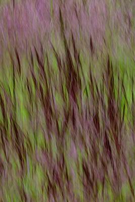 Lake Grass Art Print