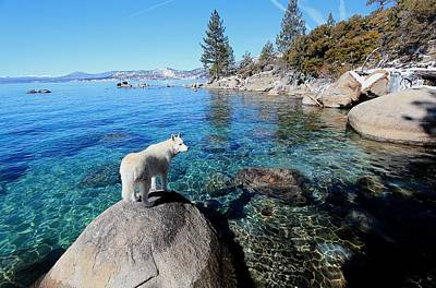 Photograph - Lake Tahoe Wild by Sean Sarsfield
