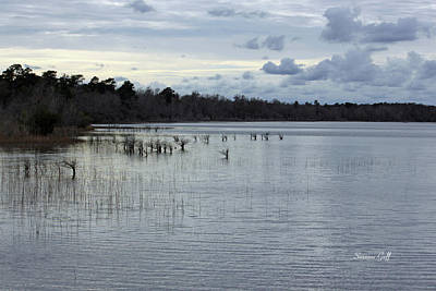 Lake Waccamaw Photograph - Lake Waccamaw IIi by Suzanne Gaff