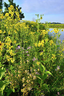 Photograph - Lakeside Wildflowers by Ray Mathis