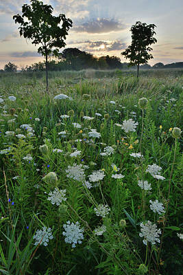 Photograph - Lakewood Forest Preserve Prairie by Ray Mathis