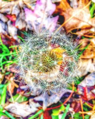 Dandelion Digital Art - Landstar by 2141 Photography