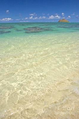 Photograph - Lanikai Coral Head by Tomas del Amo - Printscapes