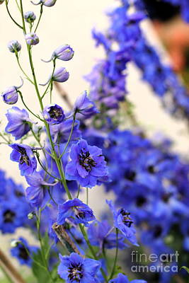 Photograph - Larkspur by Angela Rath