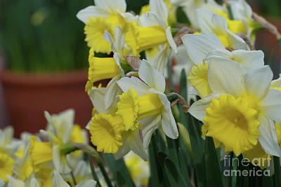 Photograph - Las Vegas Daffodils by Glenn Franco Simmons