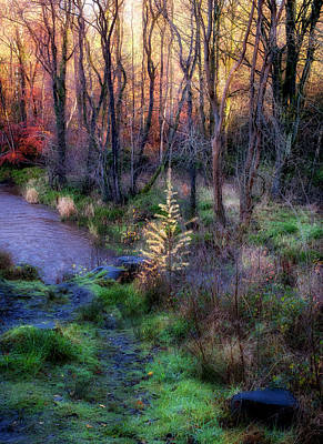 Photograph - Last Days Of Autumn by Jeremy Lavender Photography