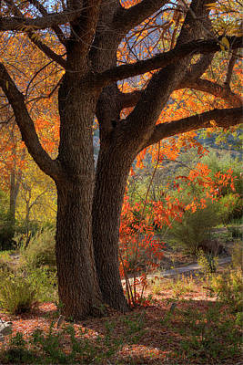 Photograph - Last Of Autumn by Sue Cullumber