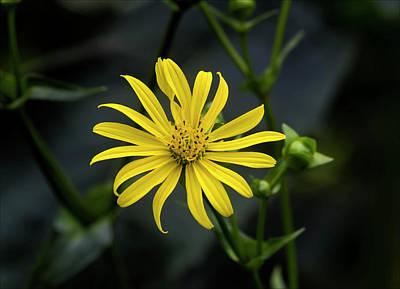 Photograph - Late Summer Flower by Robert Ullmann