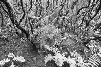 Photograph - Laurel Forest Tenerife by Marek Stepan
