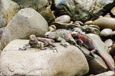 Creative Charisma - Lava lizard on Galapagos Islands by Marek Poplawski