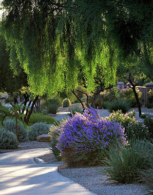 Jerry Sodorff Royalty-Free and Rights-Managed Images - Lavendar Walk 29950 by Jerry Sodorff