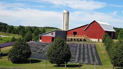 Photograph - Lavender Hill Farms by Kathleen Luther