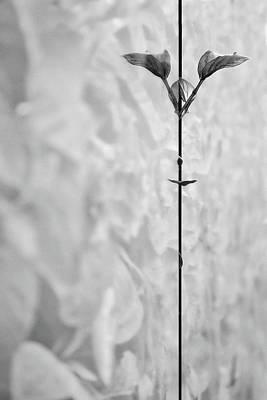 Photograph - Leaf #9175 by Andrey Godyaykin