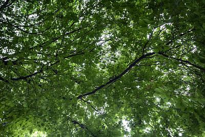 Nirvana - Leaf Canopy by Robert Ullmann