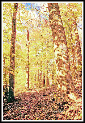 Photograph - Leaf Covered Path In Autumn Woods by A Gurmankin