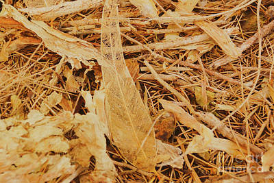 Photograph - Leaf Skeleton by Cassandra Buckley