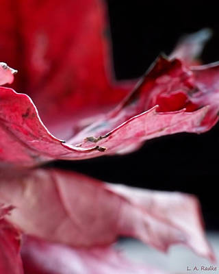 Photograph - Leaf Study V by Lauren Radke