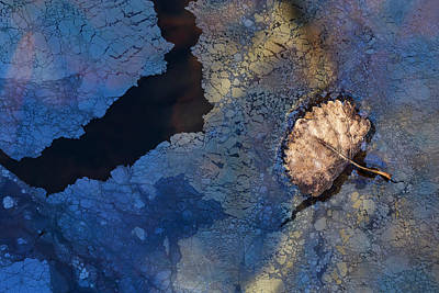 Photograph - Leaf Underworld by Deborah Hughes
