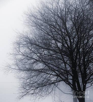 Leafless Tree In Fog Art Print by Elena Elisseeva