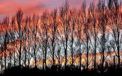 Photograph - leafless Trees by Werner Lehmann