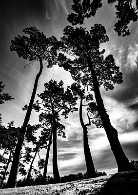 Photograph - Leaning Trees by Roseanne Jones