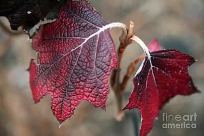Red Leaf Digital Art - Leaves by Amanda Barcon