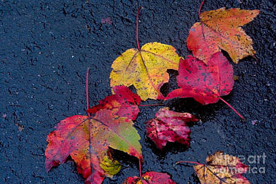 Fall Foliage Photograph - Leaves by April Bielefeldt