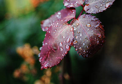Photograph - Leaves by David Harding