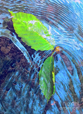 Photograph - Leaves In A Stream by Todd Breitling