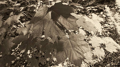 Photograph - Leaves In Black And White  by Cathy Anderson