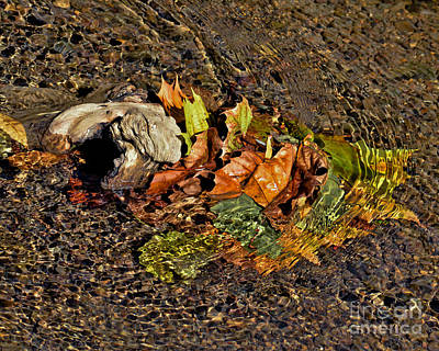 Photograph - Leaves In The Water by Kerri Farley