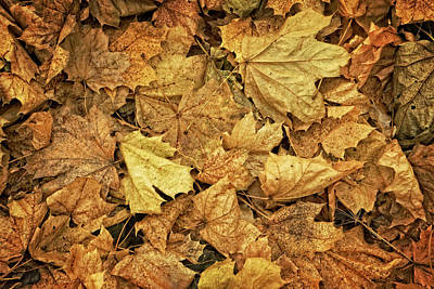 Photograph - Leaves by Jerry Golab