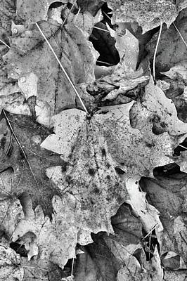Photograph - Leaves On The Ground  by Lyle Crump