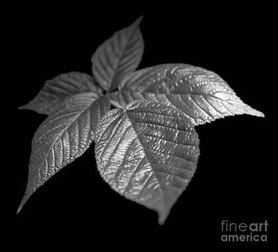 Leaves Art Print by Tony Cordoza