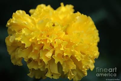 Photograph - Lemon Ruffles by Susan Herber