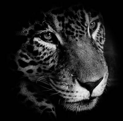 Photograph - Leopard In The Shadows by Athena Mckinzie