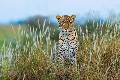 Leopard Panthera Pardus, Serengeti Art Print