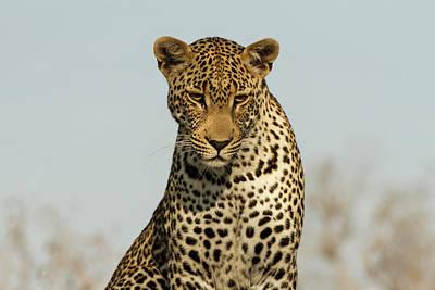 Photograph - Leopard Portrait by Yvette Van Teeffelen