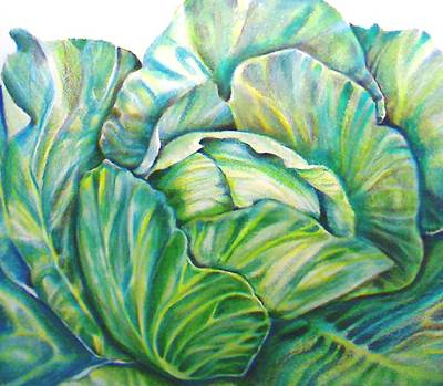Lettuce Drawing - Lettuce by Cami Rodriguez