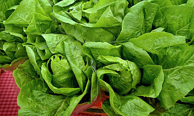 Photograph - Lettuce by Phil Cardamone