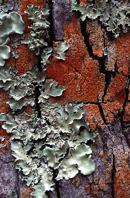 Built Structure Photograph - Lichen On Tree Bark by John Foxx