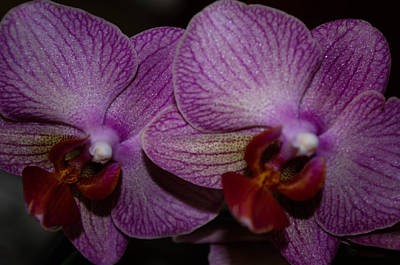 Photograph - Life As A Orchid  by Gerald Kloss