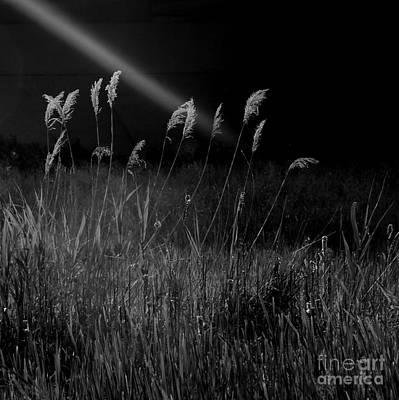 Photograph - Light by A K Dayton