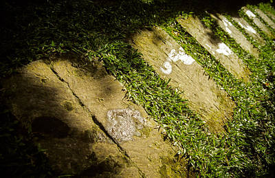 Photograph - Light Footsteps In The Garden by T Brian Jones
