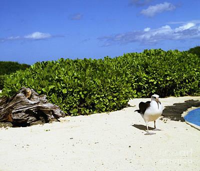 Photograph - Likes Long Walks Along The Beach by John Bowers